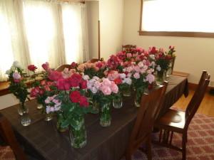 461 roses 011